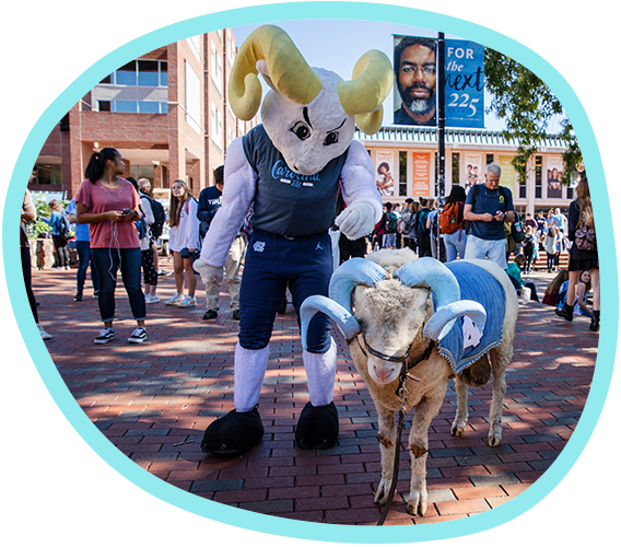 Carolina's athletics mascot, Rameses, reaches down to pet a real ram whose horns are painted Carolina blue
